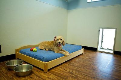 Meadowlake Pet Resort Indoor Dog Boarding Suite
