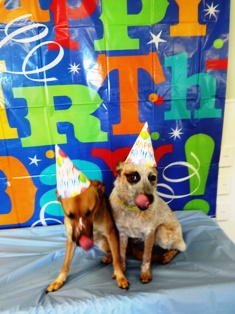 Tomorrow Friday December 13th Winnie Will Be Celebrating Her 1st Birthday In Daycare Sure To Sign Your Pup Up For And Get Their Party