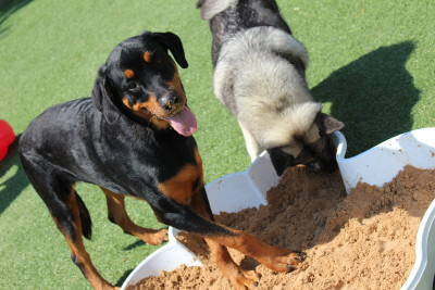 Two dogs playing together