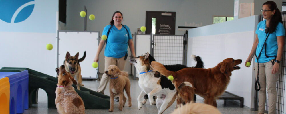 Doggy daycare large group playtime at Galleria Area Meadowlake