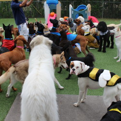 Group dog play at dog daycare in Houston