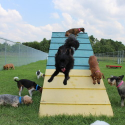 Meadowlake Dog Daycare dogs on a ramp