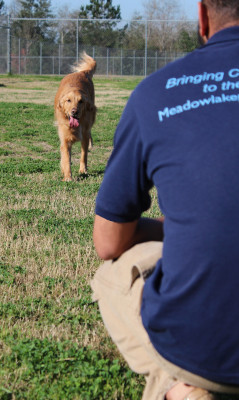 Dog Training at Meadowlake