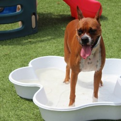 Dog standing in mini pool