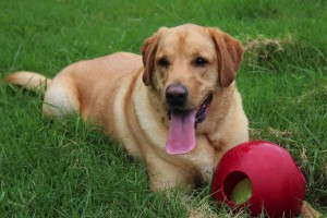 Meadowlake Pet Resort Dog Boarding Offer