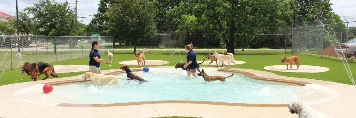Dog daycare in houston pearland tx meadowlake pet resort for Best doggy day care