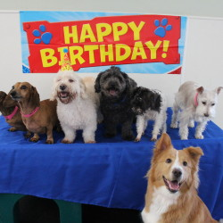 Birthday party for dogs in Houston
