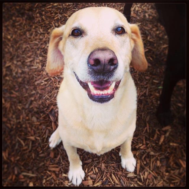 Meadowlake Pet Resort Critter of the Week - Riley