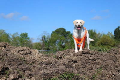 Dog Safety protocols