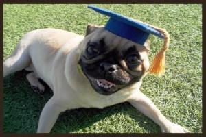Dog training graduation at Meadowlake Pet Resort