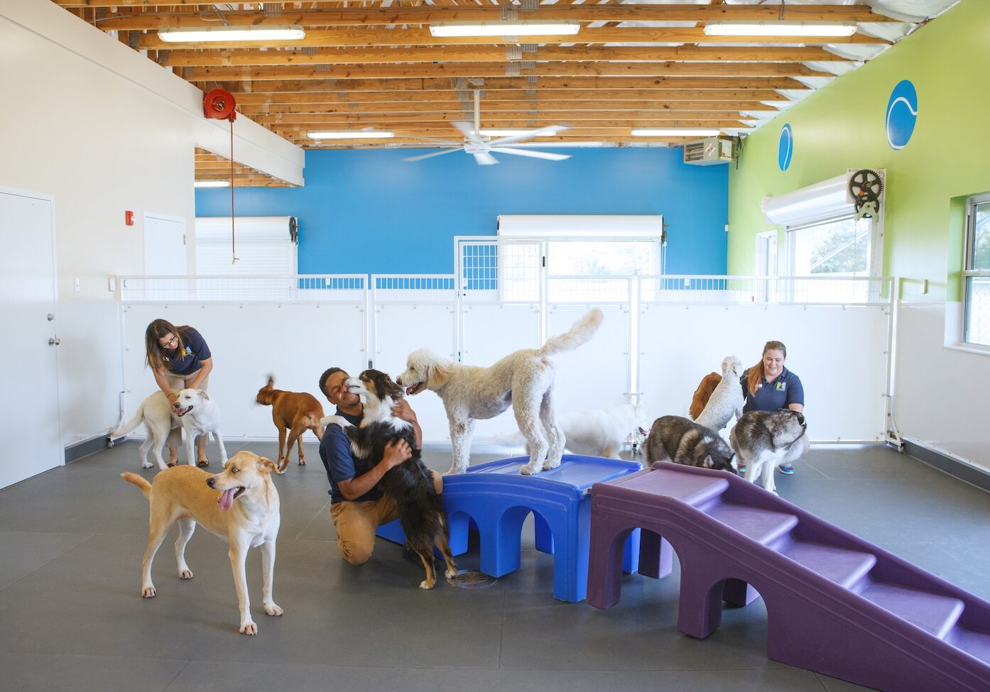 Dog daycare at meadowlake