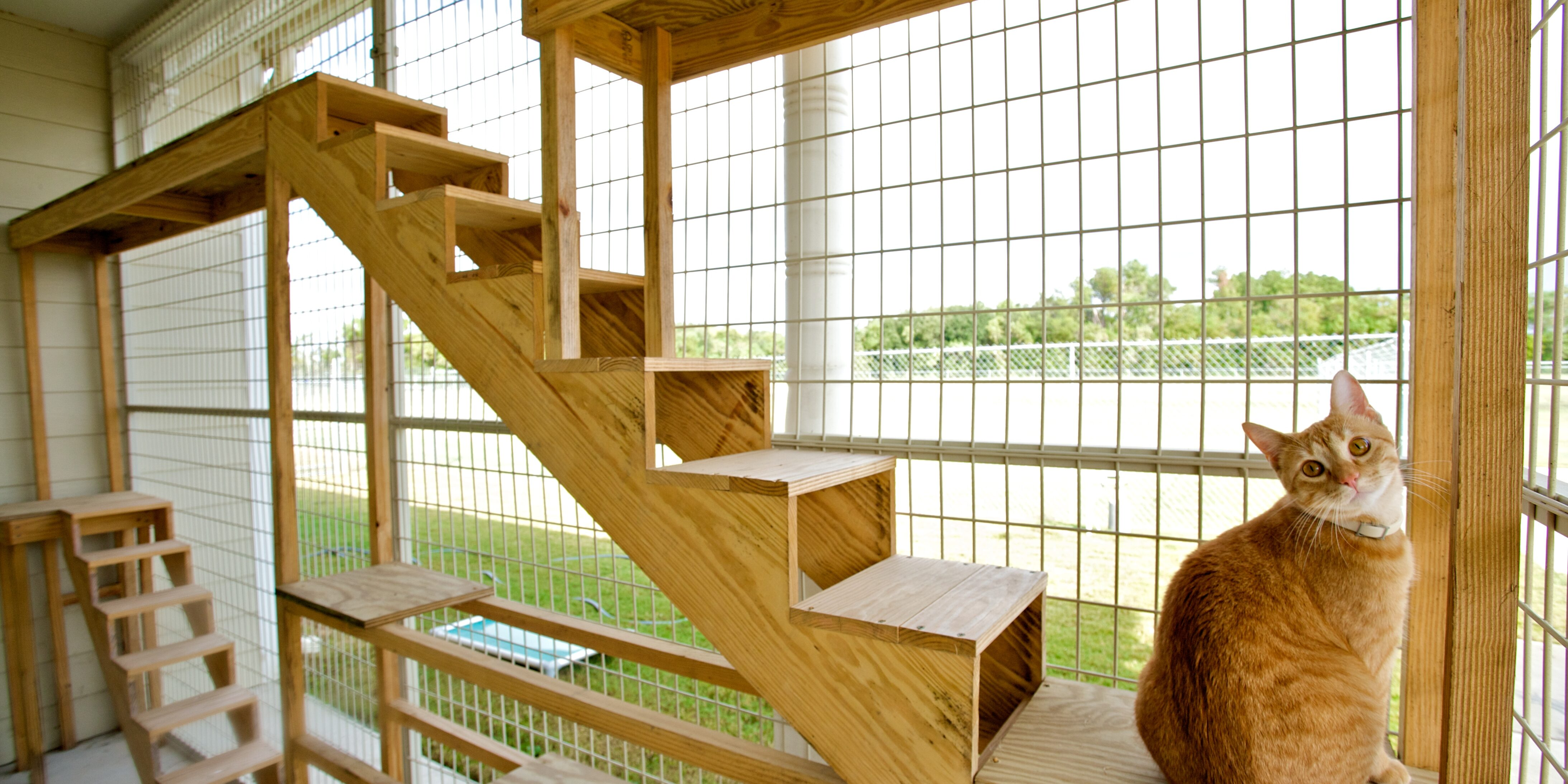 Meadowlake Pet Resort Cat Boarding in Goose Patio