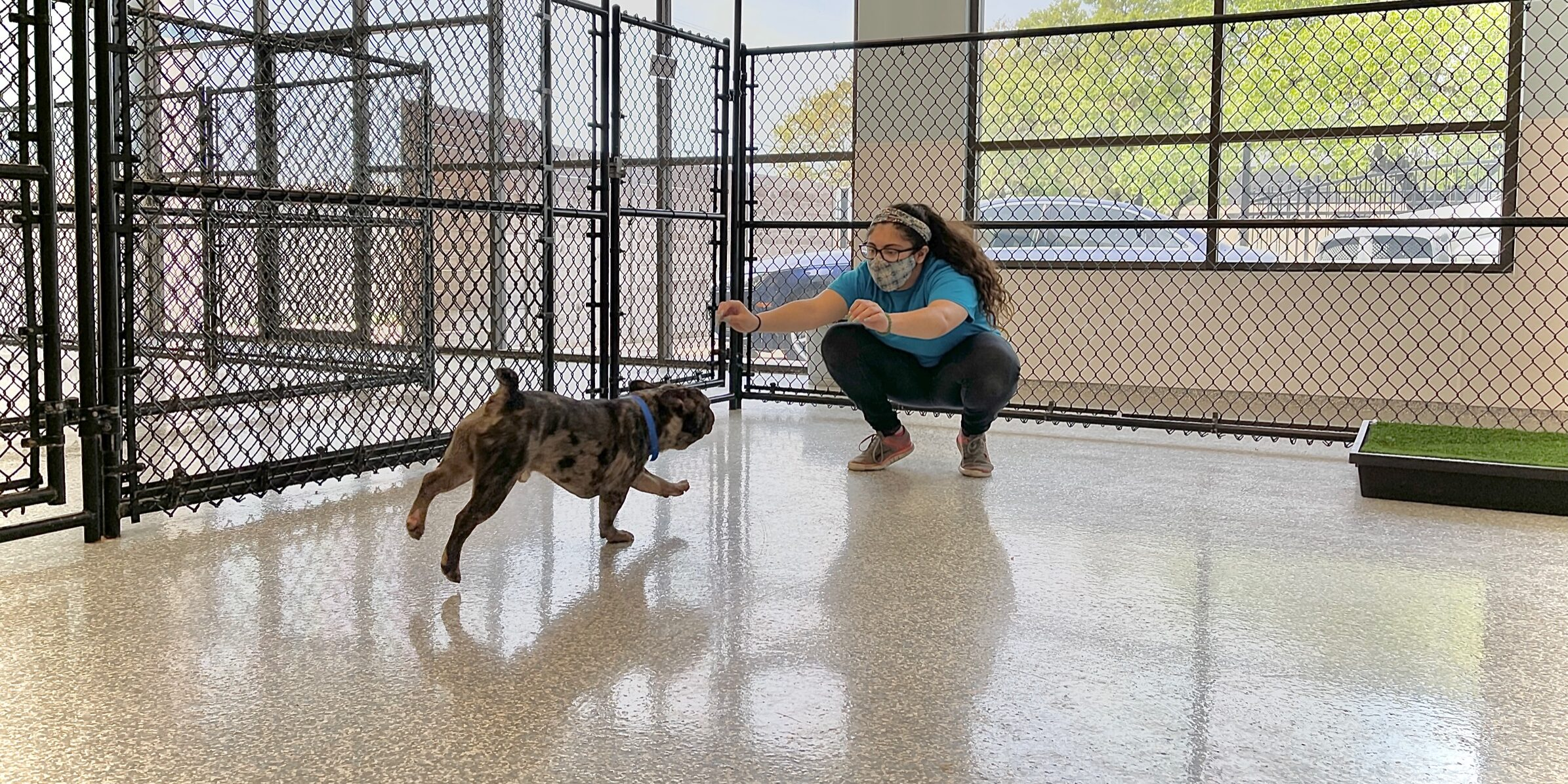 Playtime in Kennel