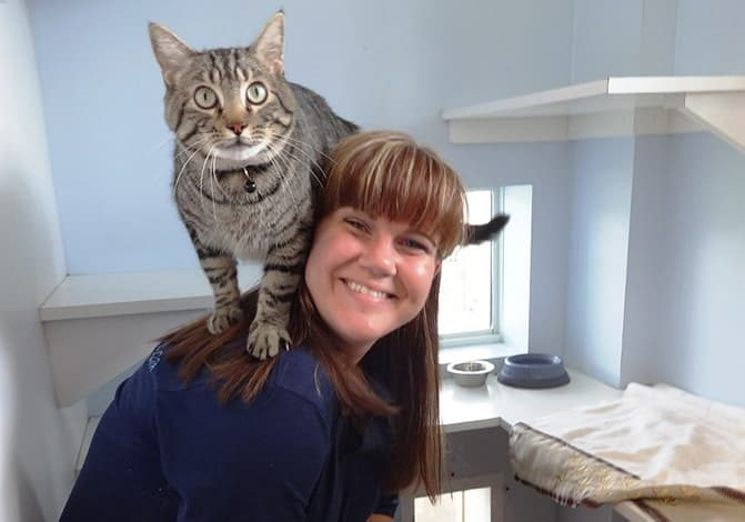 Cat perching on a staff member's shoulder