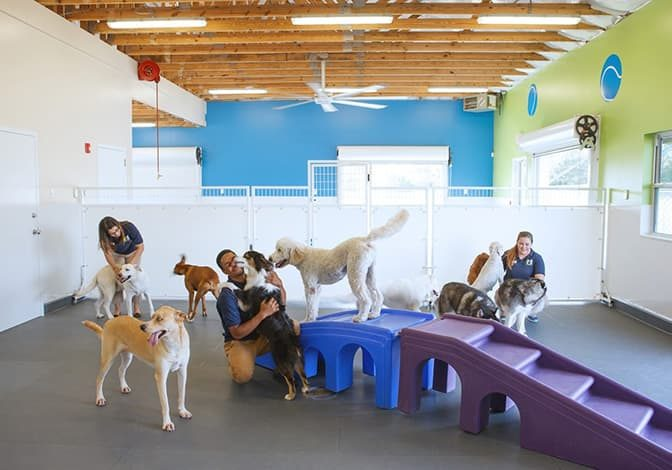 Dogs in the playroom with staff members