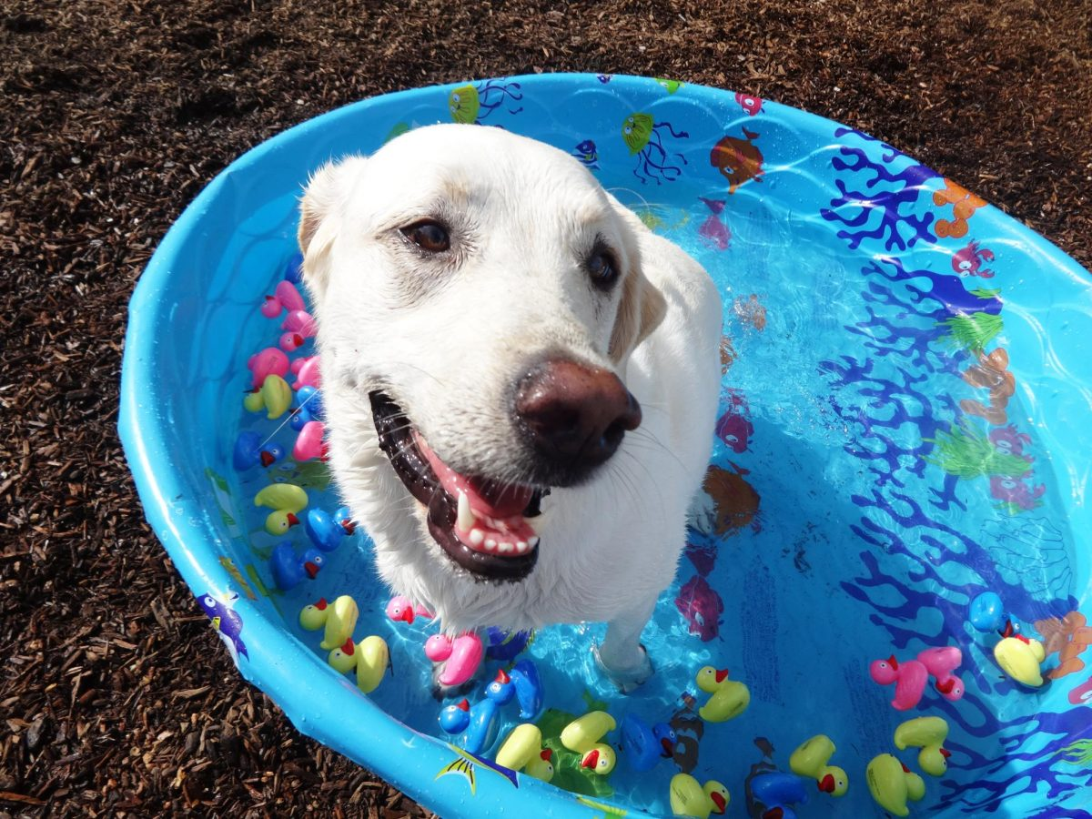 happy dog in pool
