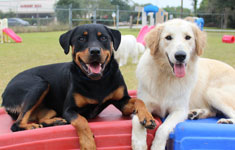 Two dogs sitting on playground equipment