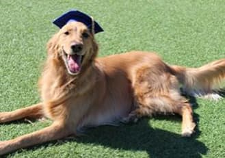 Dog with a mortar board lying in the grass