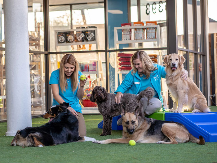 Staff playing with dogs