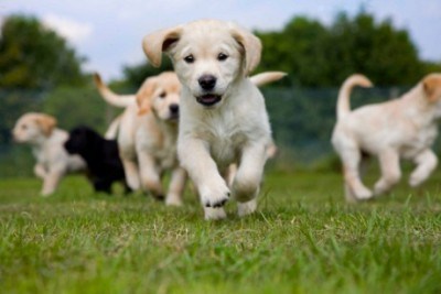 Running puppies dog boarding in Houston